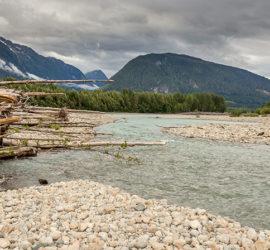 Warum Zedern aus Alaska gefährdet sind